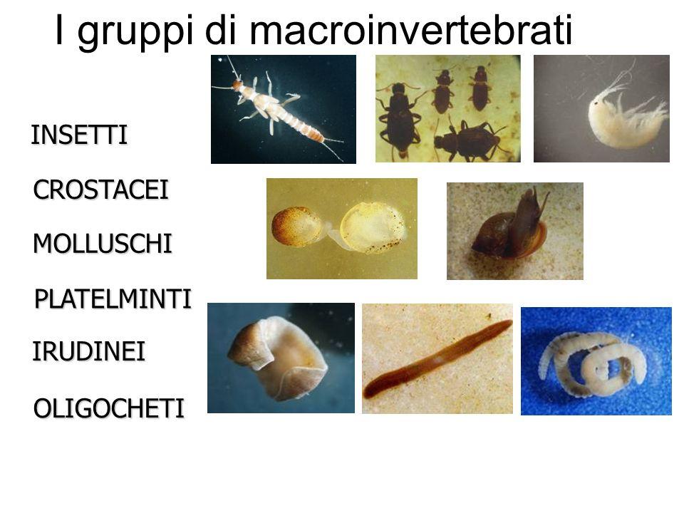 I gruppi di macroinvertebrati