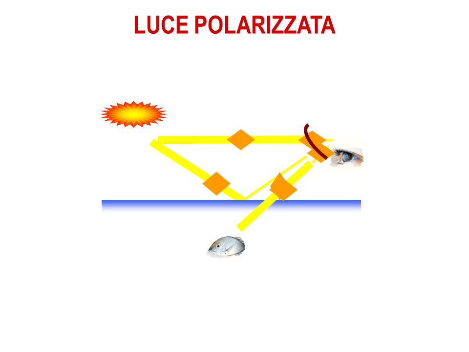 LUCE POLARIZZATA