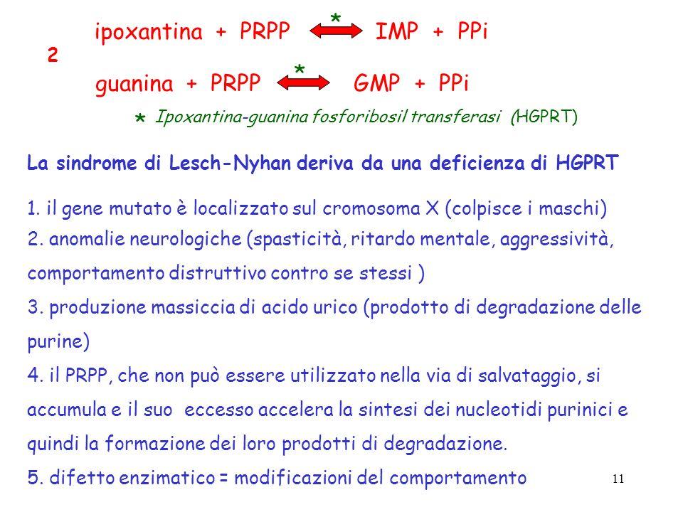 * ipoxantina + PRPP IMP + PPi guanina + PRPP GMP + PPi * * 2