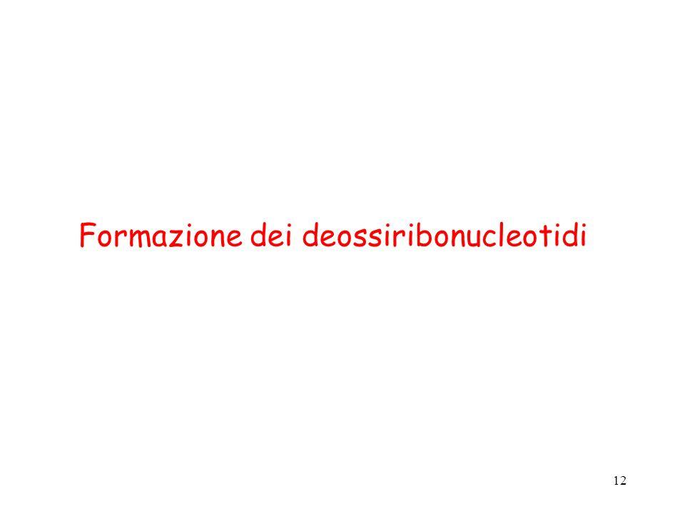 Formazione dei deossiribonucleotidi