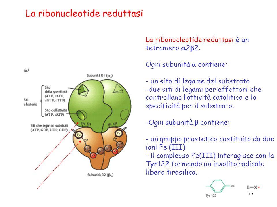 La ribonucleotide reduttasi