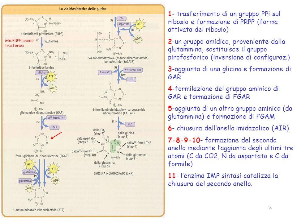 3-aggiunta di una glicina e formazione di GAR