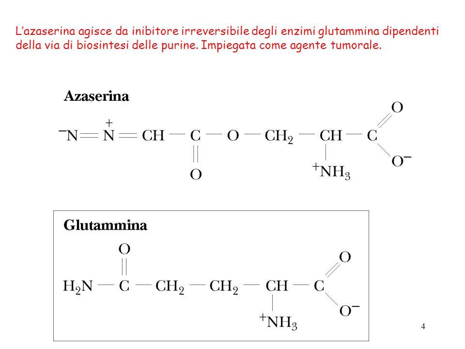 L'azaserina agisce da inibitore irreversibile degli enzimi glutammina dipendenti