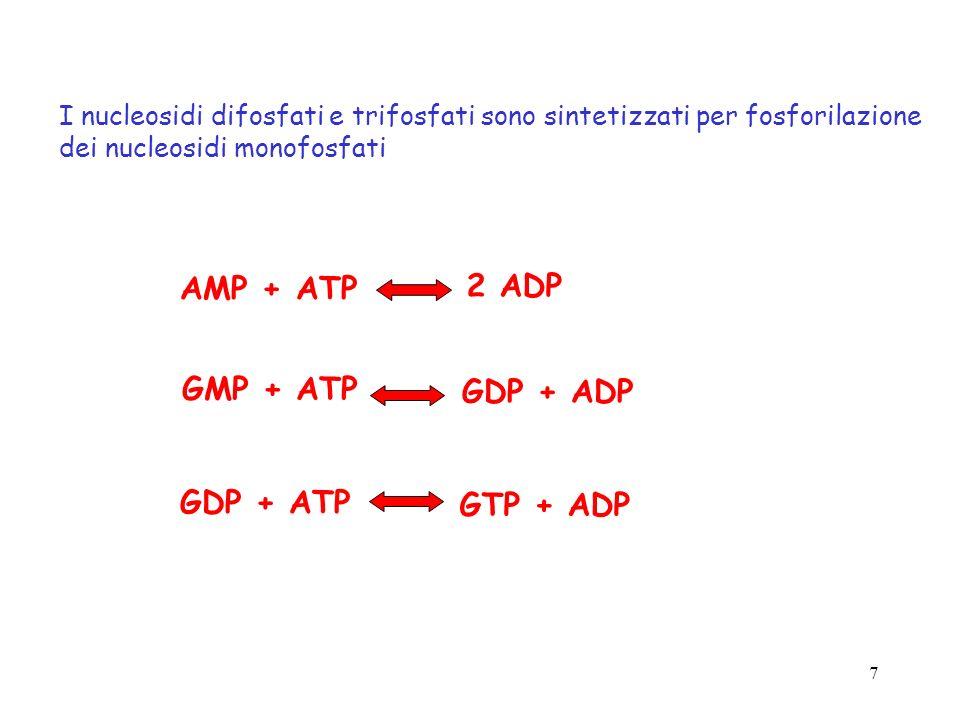 AMP + ATP 2 ADP GMP + ATP GDP + ADP GDP + ATP GTP + ADP