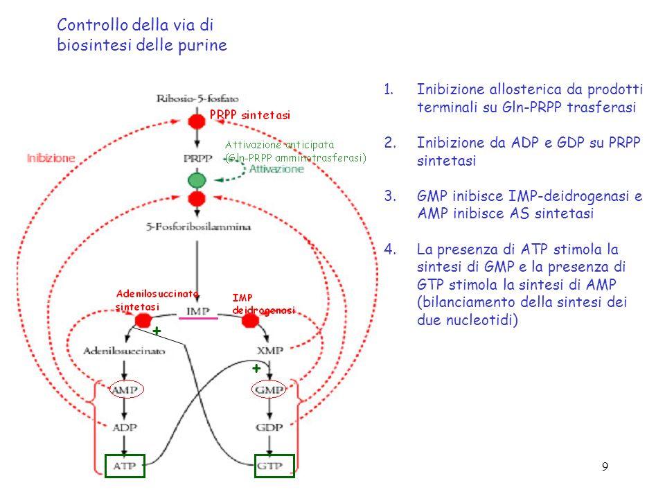 + + Controllo della via di biosintesi delle purine