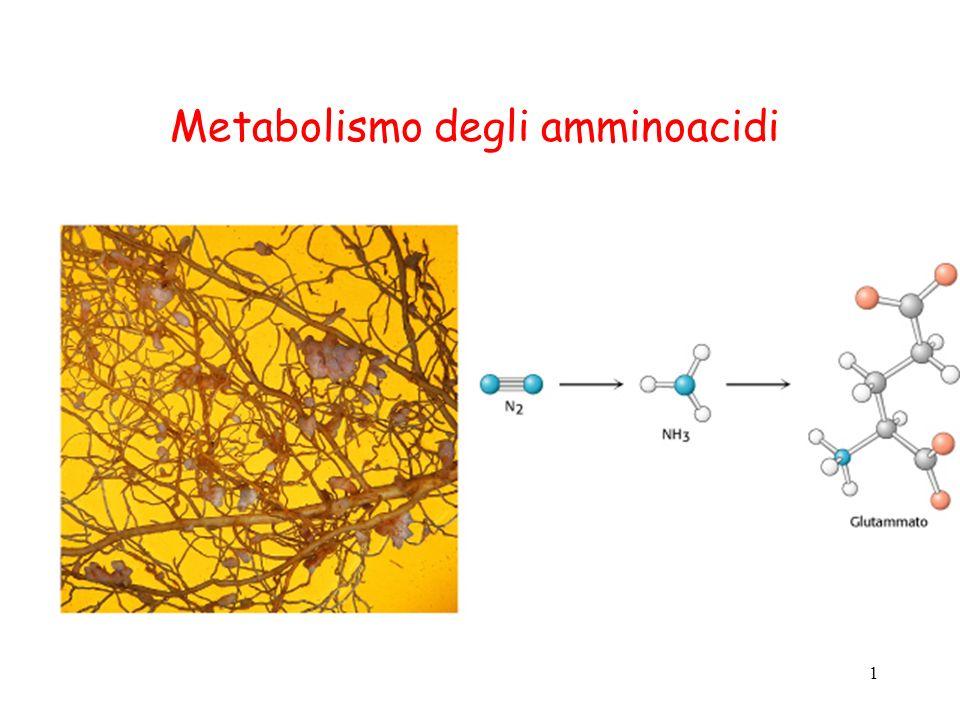 Metabolismo degli amminoacidi