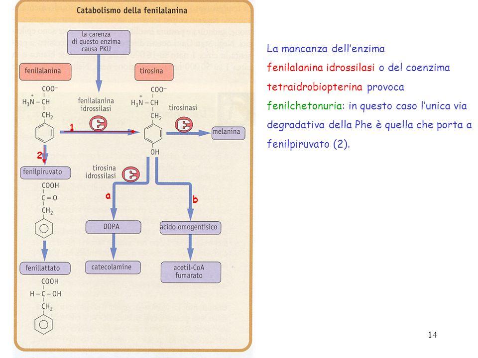 La mancanza dell'enzima fenilalanina idrossilasi o del coenzima
