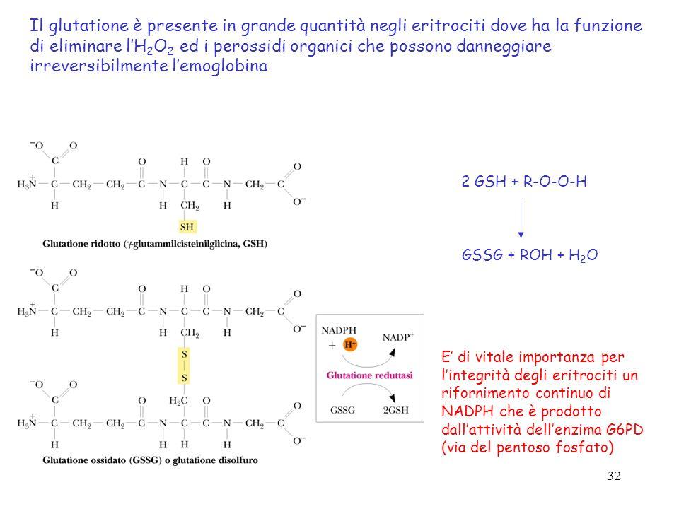 Il glutatione è presente in grande quantità negli eritrociti dove ha la funzione di eliminare l'H2O2 ed i perossidi organici che possono danneggiare irreversibilmente l'emoglobina