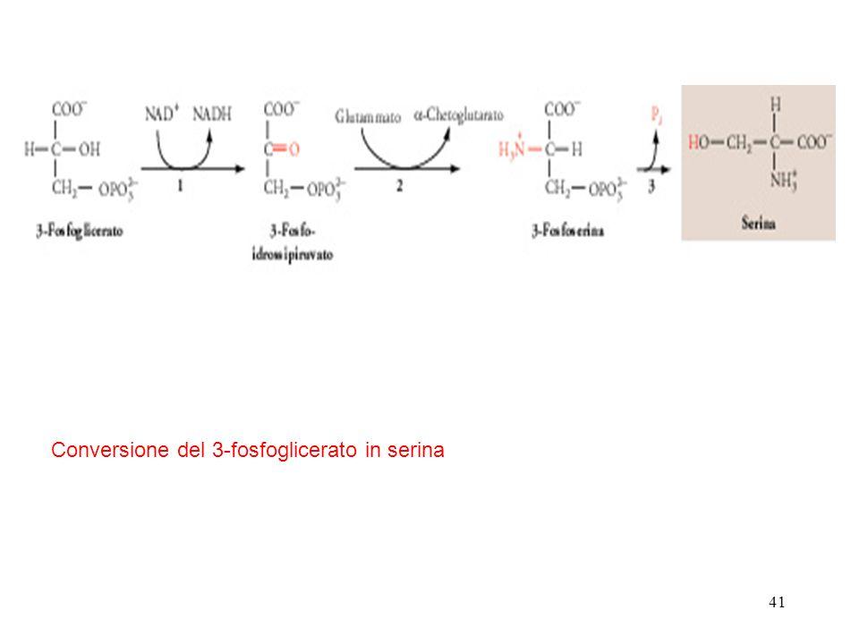 Conversione del 3-fosfoglicerato in serina