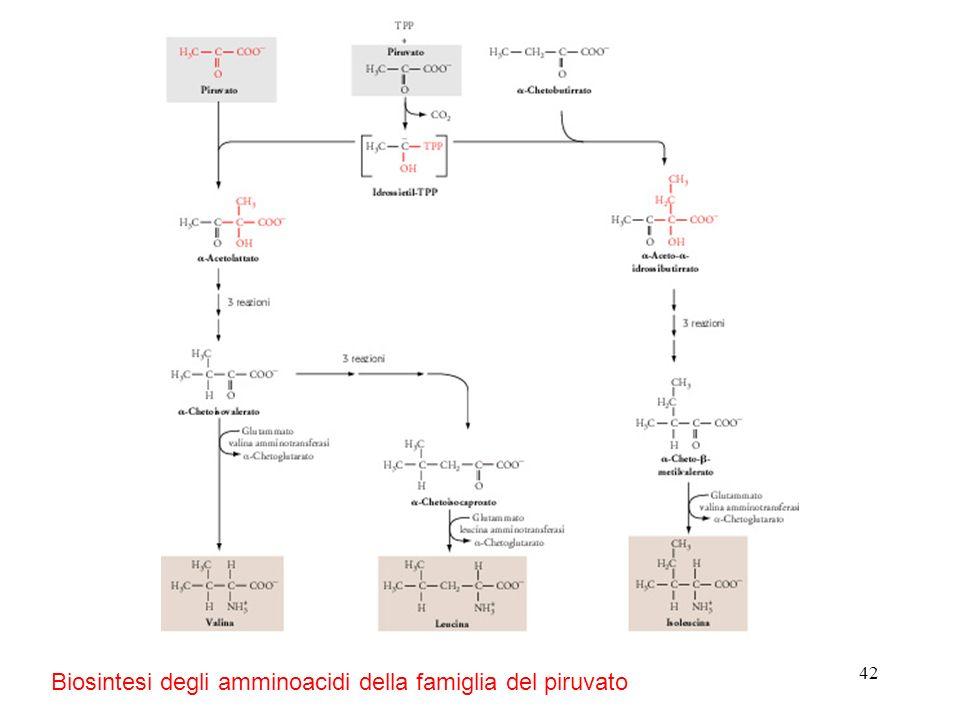 Biosintesi degli amminoacidi della famiglia del piruvato