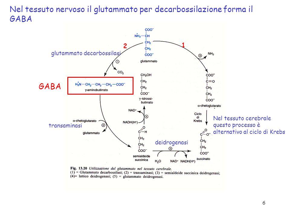Nel tessuto nervoso il glutammato per decarbossilazione forma il GABA