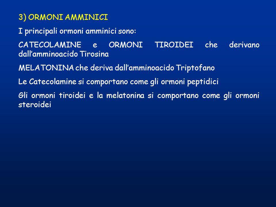 3) ORMONI AMMINICI I principali ormoni amminici sono: CATECOLAMINE e ORMONI TIROIDEI che derivano dall'amminoacido Tirosina.