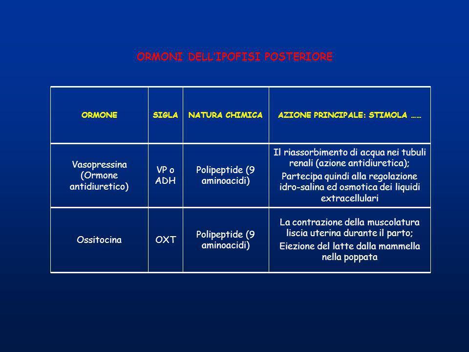 ORMONI DELL'IPOFISI POSTERIORE