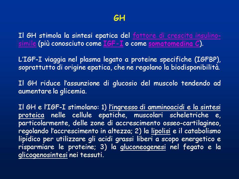 GHIl GH stimola la sintesi epatica del fattore di crescita insulino-simile (più conosciuto come IGF-I o come somatomedina C).