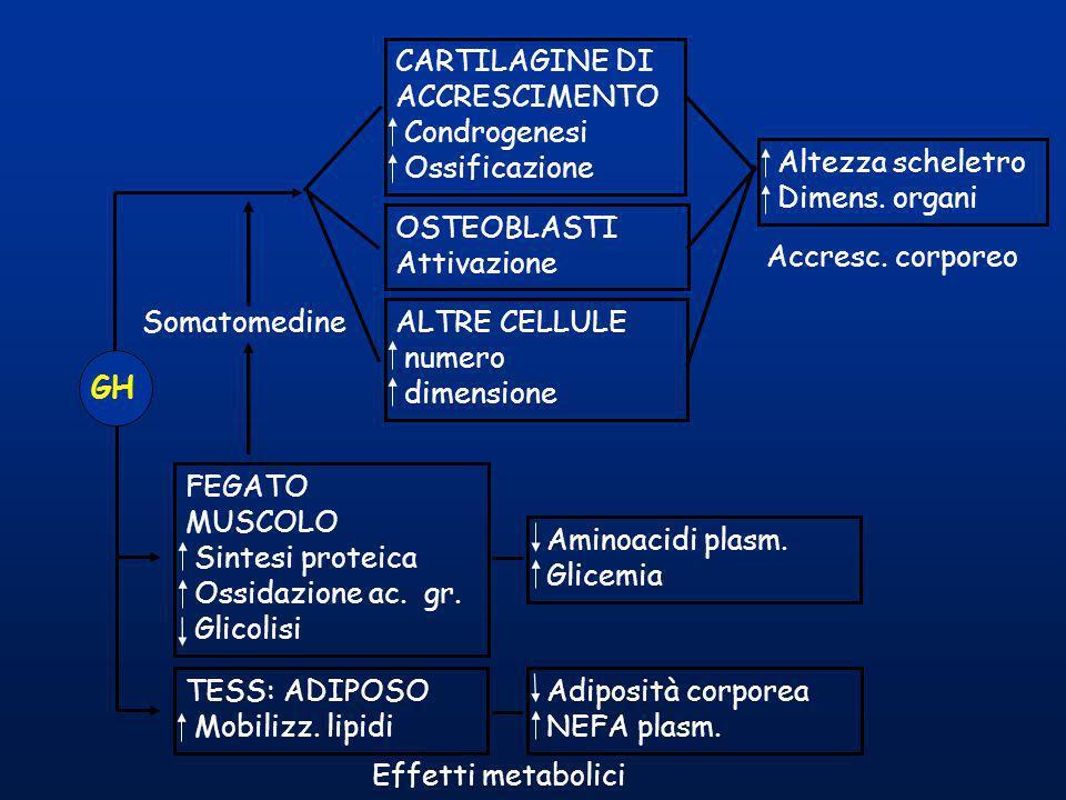 CARTILAGINE DI ACCRESCIMENTO