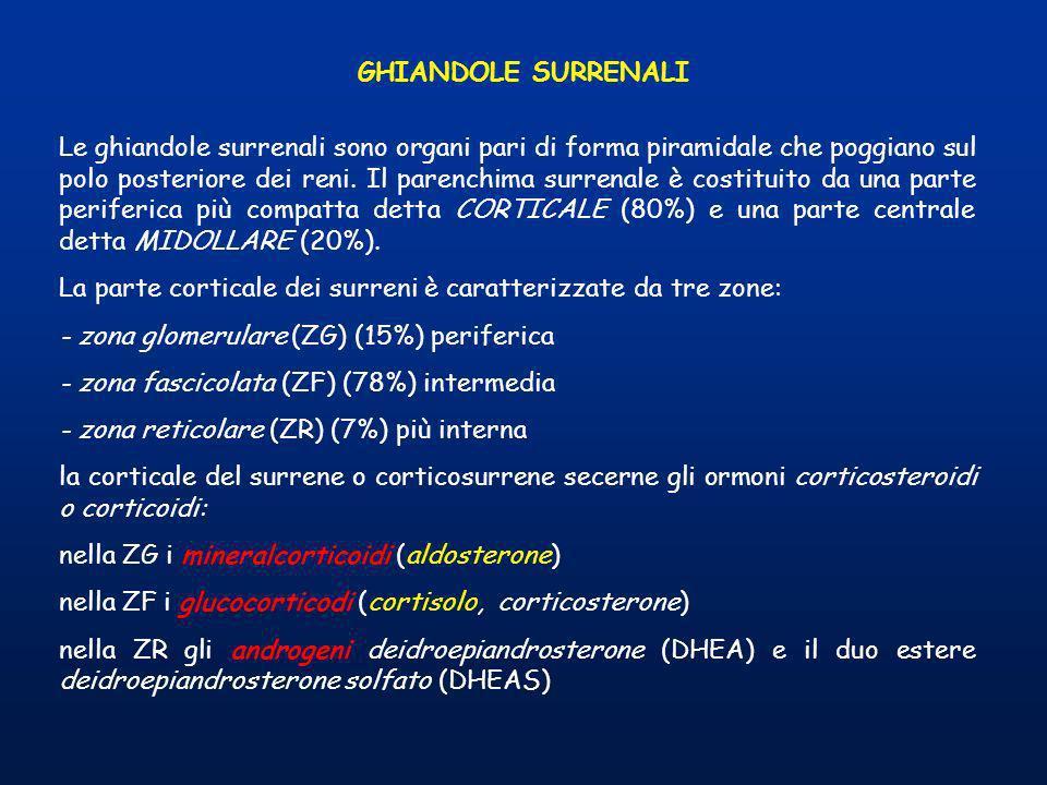 GHIANDOLE SURRENALI