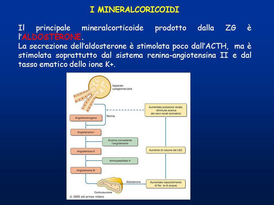 I MINERALCORICOIDI Il principale mineralcorticoide prodotto dalla ZG è l'ALDOSTERONE.
