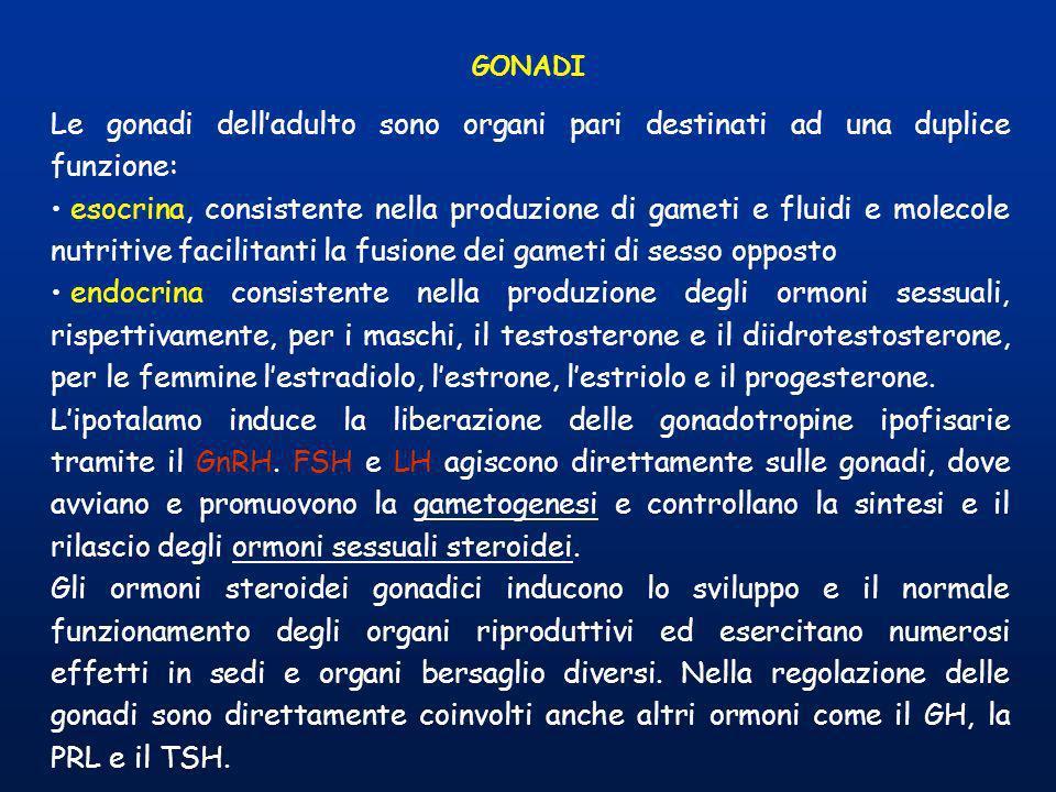 GONADI Le gonadi dell'adulto sono organi pari destinati ad una duplice funzione: