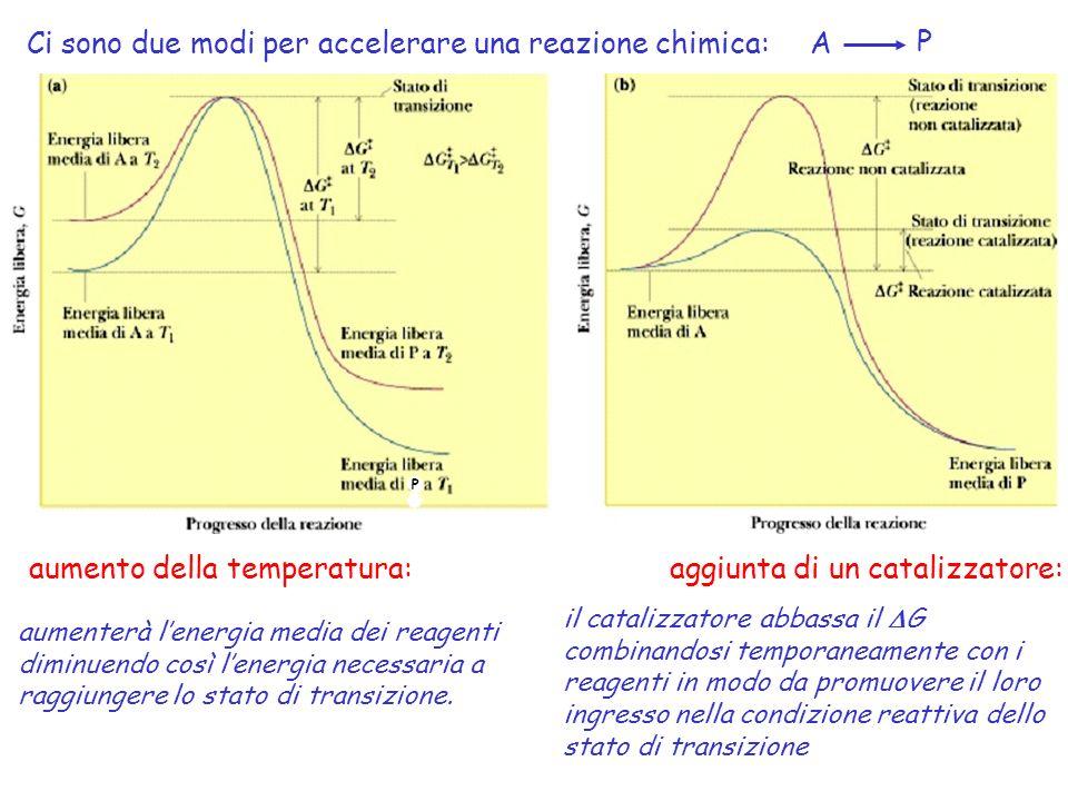 Ci sono due modi per accelerare una reazione chimica: A P