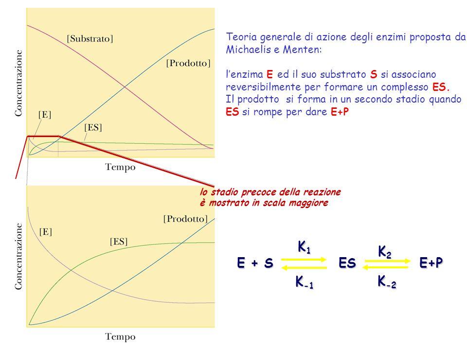 Teoria generale di azione degli enzimi proposta da