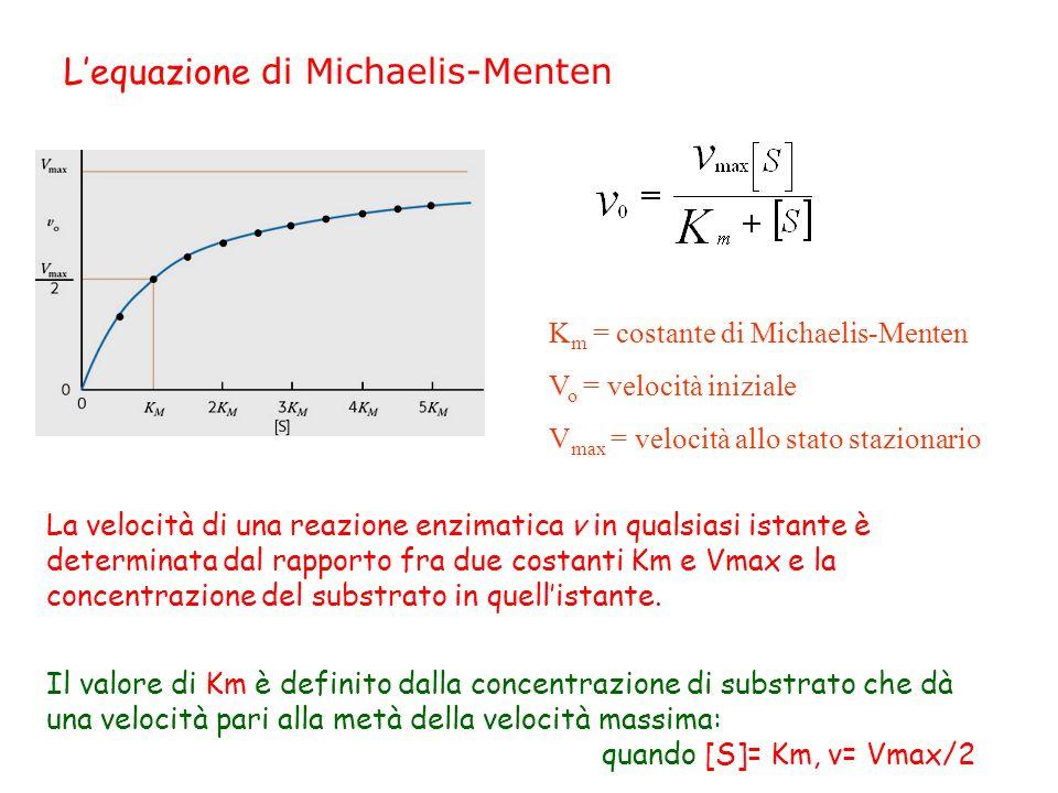 L'equazione di Michaelis-Menten