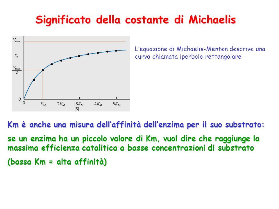 Significato della costante di Michaelis