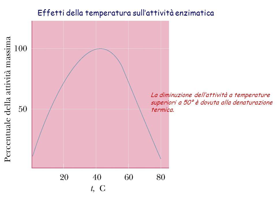Effetti della temperatura sull'attività enzimatica