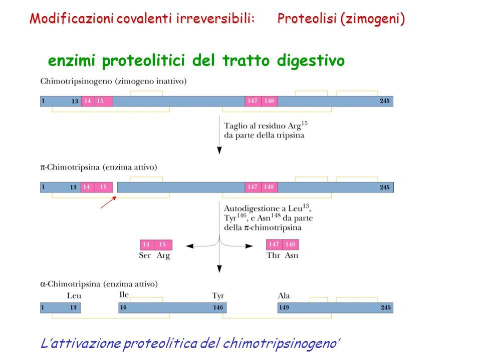 enzimi proteolitici del tratto digestivo