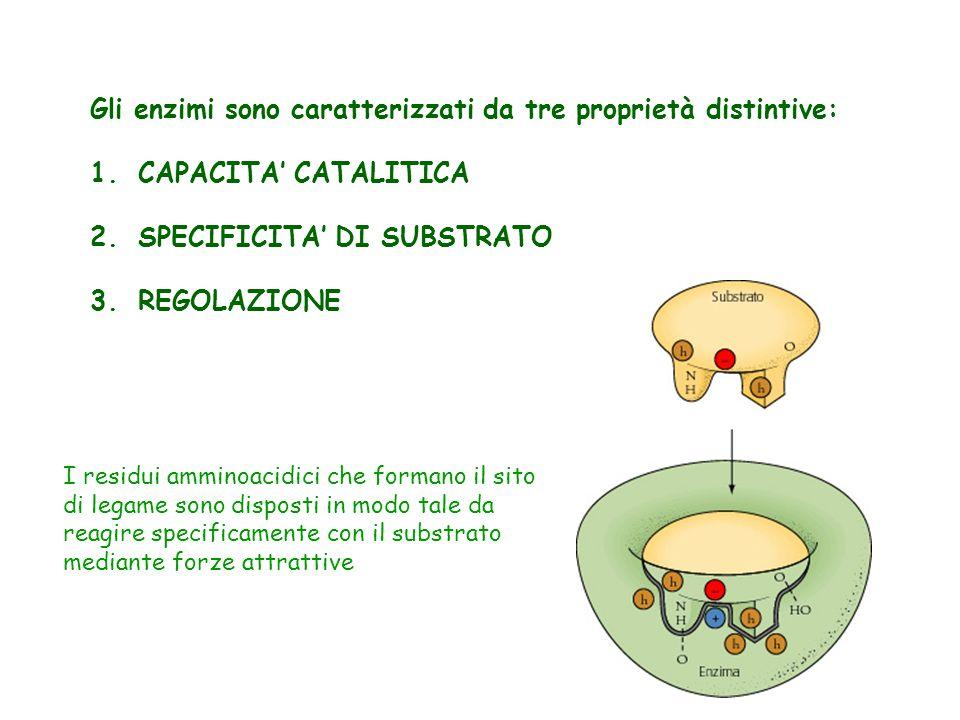 Gli enzimi sono caratterizzati da tre proprietà distintive: