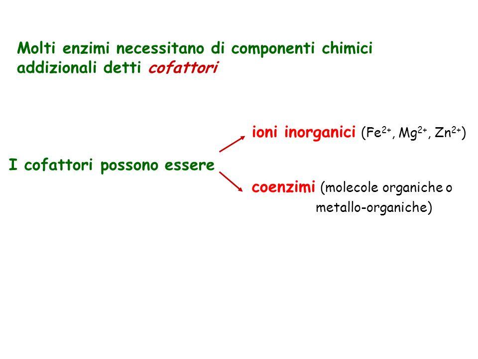I cofattori possono essere ioni inorganici (Fe2+, Mg2+, Zn2+)