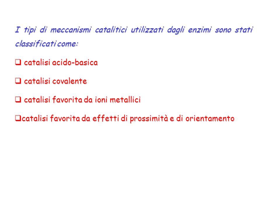 I tipi di meccanismi catalitici utilizzati dagli enzimi sono stati classificati come: