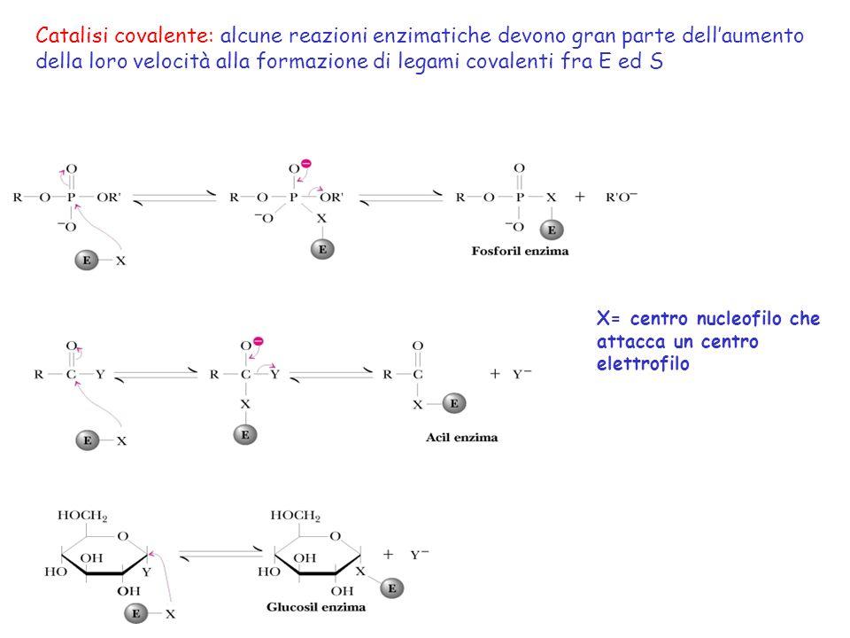 della loro velocità alla formazione di legami covalenti fra E ed S