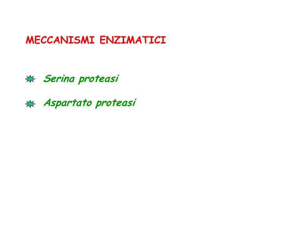 MECCANISMI ENZIMATICI