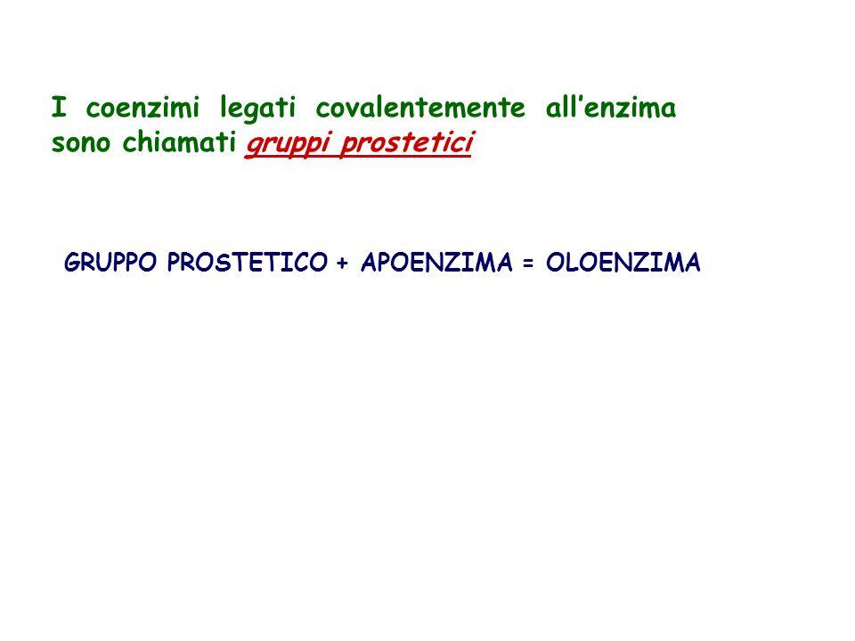 I coenzimi legati covalentemente all'enzima sono chiamati gruppi prostetici