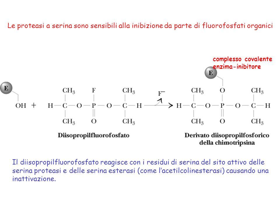 Il diisopropilfluorofosfato reagisce con i residui di serina del sito attivo delle