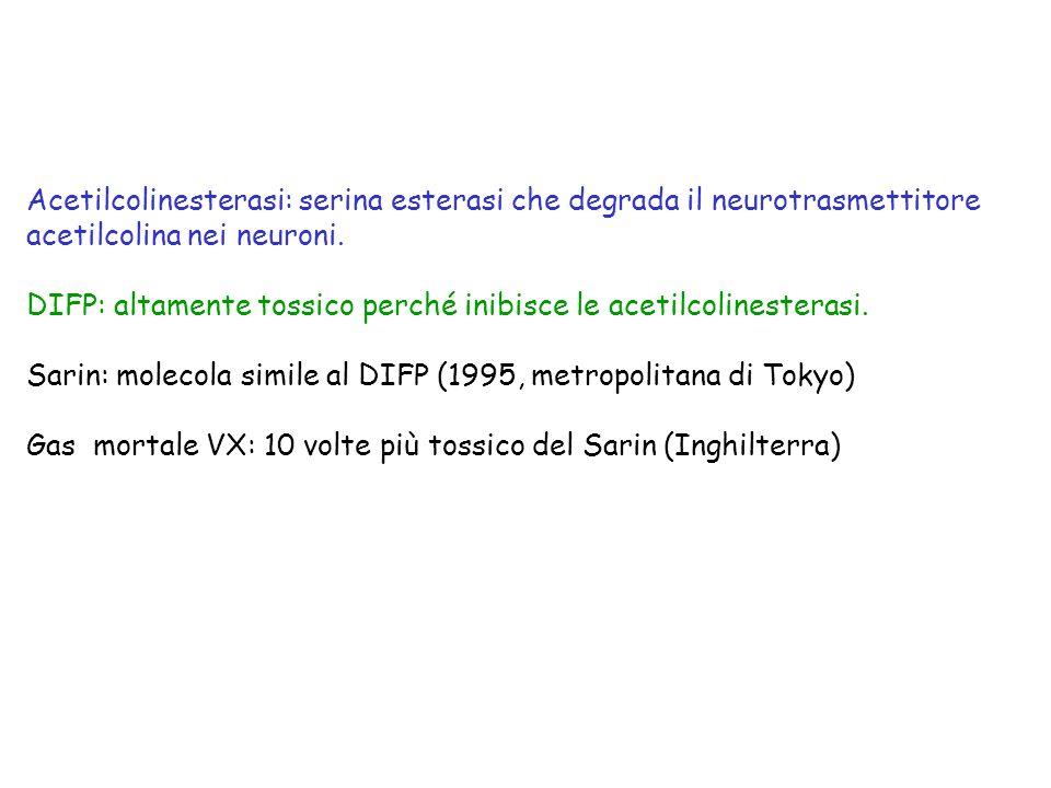 Acetilcolinesterasi: serina esterasi che degrada il neurotrasmettitore