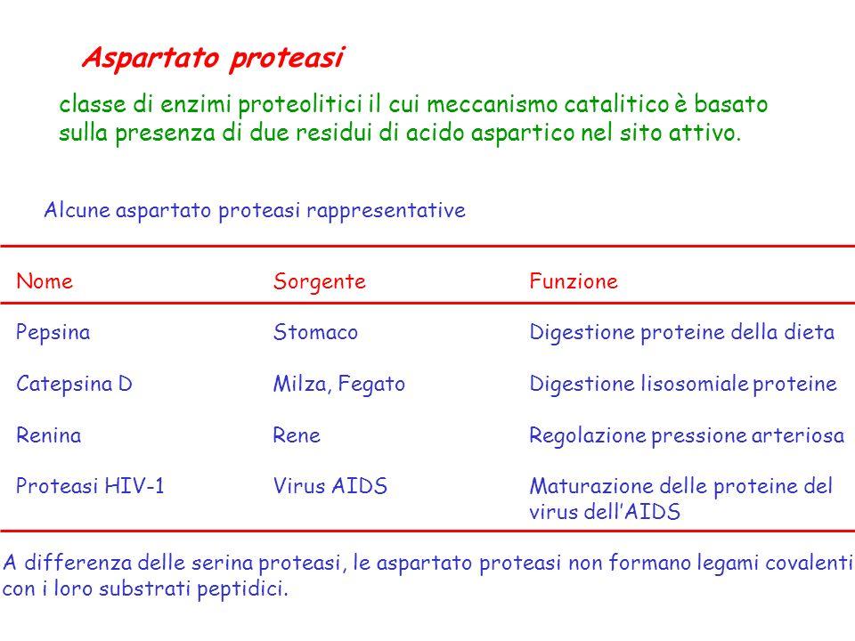 Aspartato proteasi classe di enzimi proteolitici il cui meccanismo catalitico è basato.