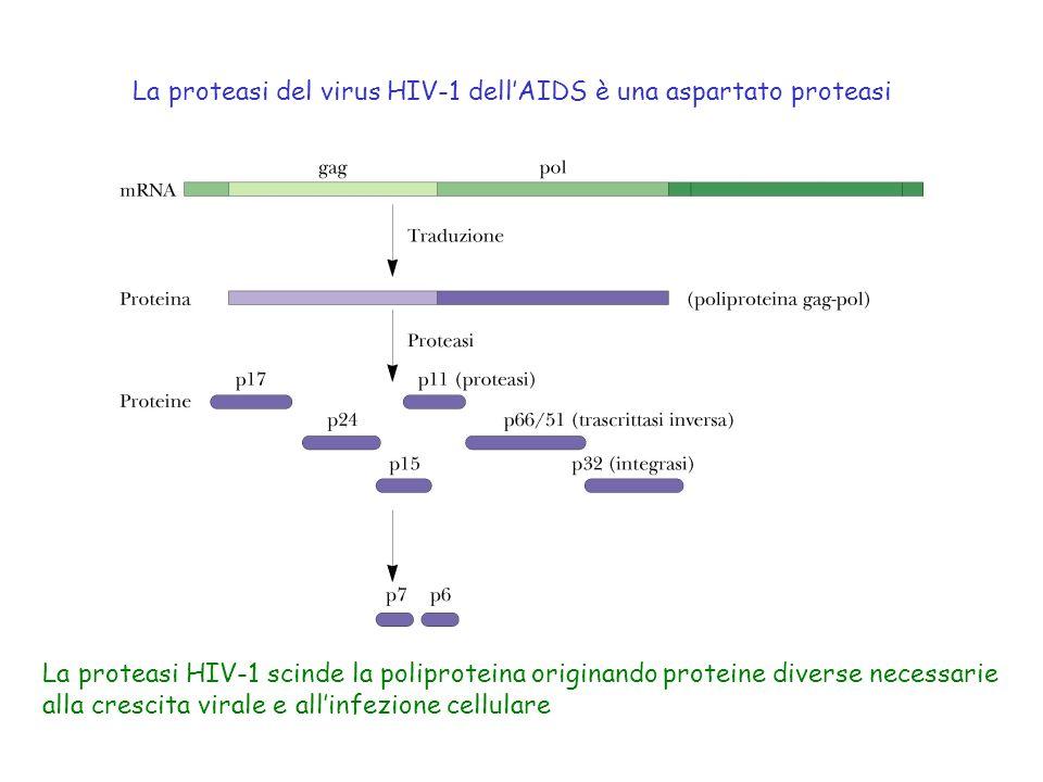 La proteasi del virus HIV-1 dell'AIDS è una aspartato proteasi