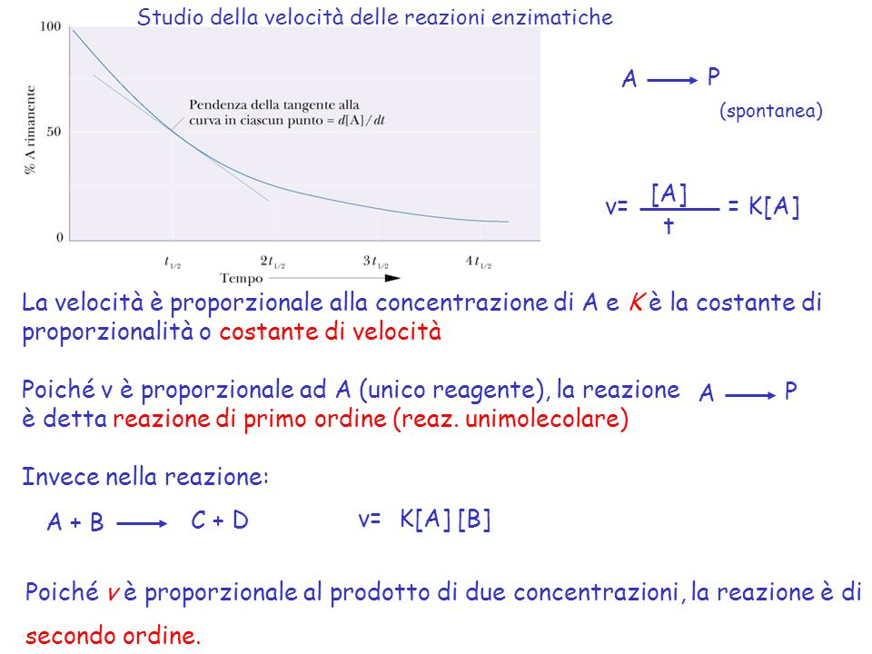 proporzionalità o costante di velocità