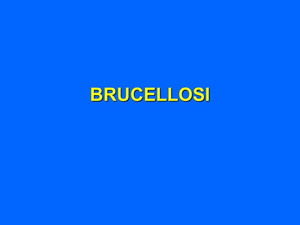 BRUCELLOSI