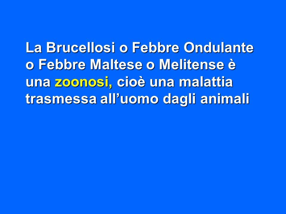 La Brucellosi o Febbre Ondulante o Febbre Maltese o Melitense è una zoonosi, cioè una malattia trasmessa all'uomo dagli animali