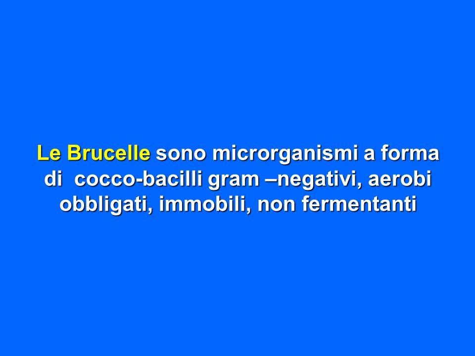 Le Brucelle sono microrganismi a forma di cocco-bacilli gram –negativi, aerobi obbligati, immobili, non fermentanti