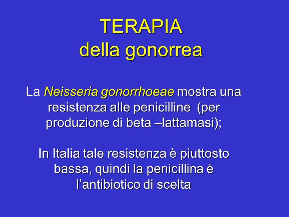 TERAPIA della gonorrea