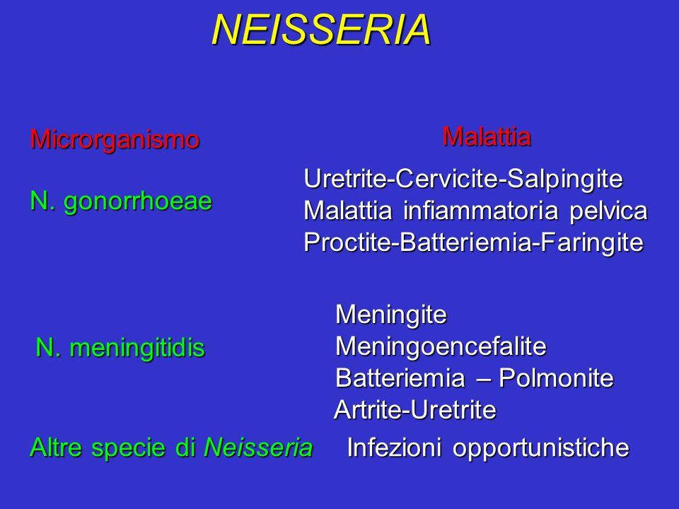 NEISSERIA Microrganismo Malattia Uretrite-Cervicite-Salpingite