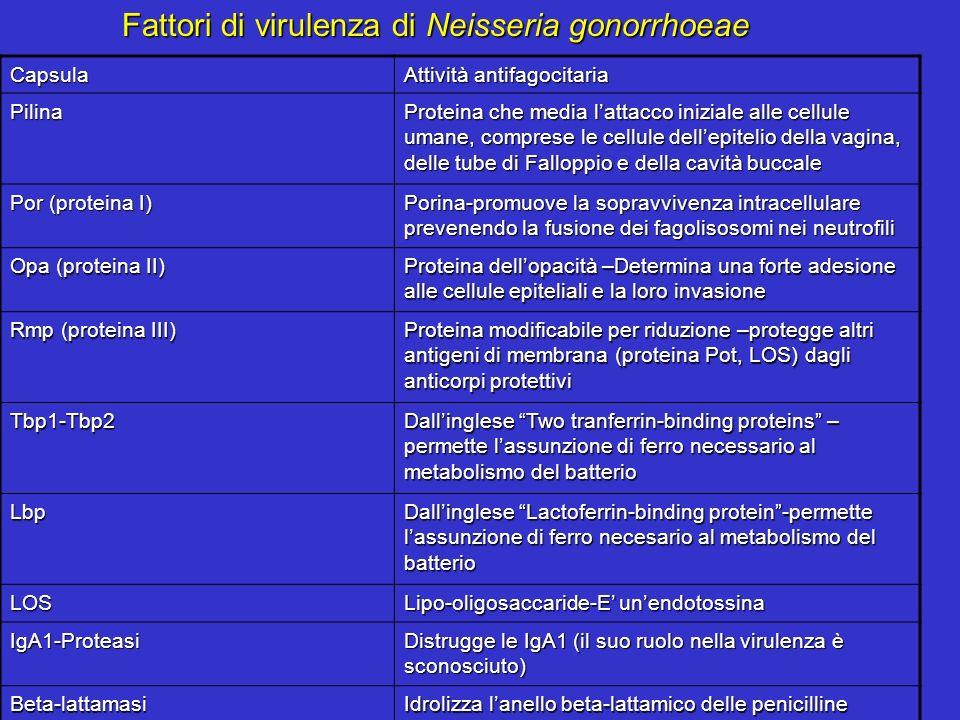 Fattori di virulenza di Neisseria gonorrhoeae