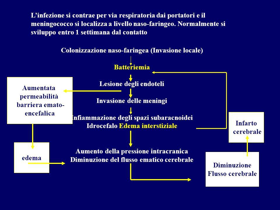 Colonizzazione naso-faringea (Invasione locale) Batteriemia
