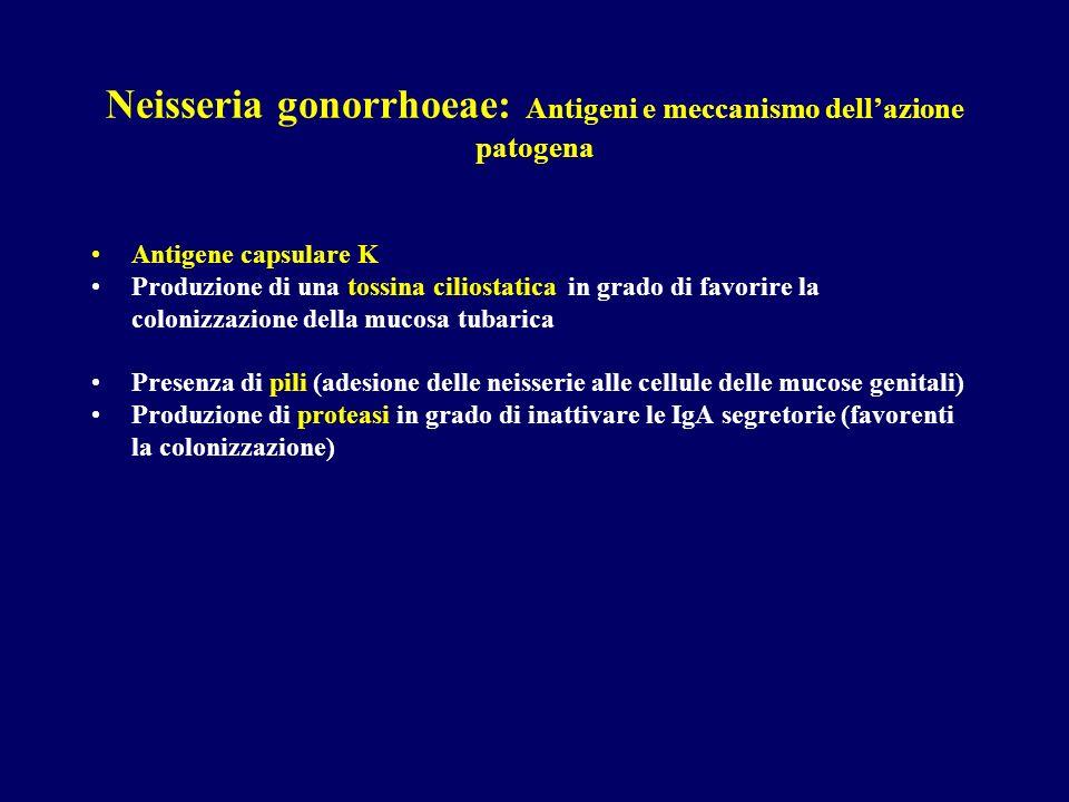 Neisseria gonorrhoeae: Antigeni e meccanismo dell'azione patogena