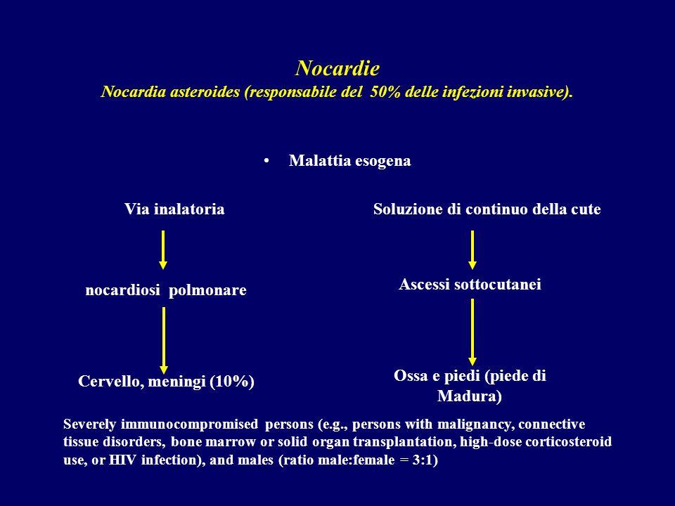 Nocardie Nocardia asteroides (responsabile del 50% delle infezioni invasive).