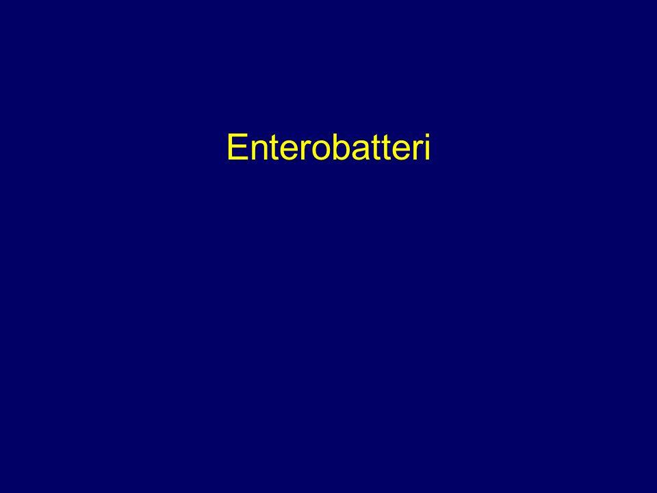 Enterobatteri