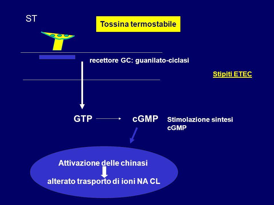 Attivazione delle chinasi alterato trasporto di ioni NA CL